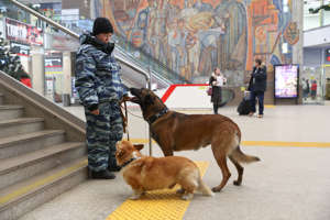 NIZHNY NOVGOROD, RUSSIA - DECEMBER 12, 2019: Russian police dogs, Ryzhy the Corgi and Zigger the Belgian Shepherd, and their owner Olga Chumarova, a Nizhny Novgorod transport police canine handler, patrol a railway station. Ryzhy, the only corgi police dog in Russia, has been serving in the Russian police for six years. Alexander Ryumin/TASS (Photo by Alexander Ryumin\TASS via Getty Images)