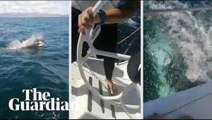 Maritime authorities in Spain have asked sailors off the coast of Galicia to give orcas a wide berth after a naval yacht lost part of its rudder following a brush with two of the whales. The encounter took place on Sunday in the Rías Baixas area of north-west Spain. Footage from the Mirfak – a Spanish naval yacht en route to a regatta – shows the animals swimming alongside and underneath the boat before the sailors realise the rudder has been damaged   Subscribe to Guardian News on YouTube ► http://bit.ly/guardianwiressub  Boats off Spain damaged in orca encounters ► https://www.theguardian.com/environment/2020/sep/01/boats-off-spain-damaged-in-orca-encounters  Support the Guardian ► https://support.theguardian.com/contribute  Today in Focus podcast ► https://www.theguardian.com/news/series/todayinfocus  The Guardian YouTube network:  The Guardian ► http://www.youtube.com/theguardian Owen Jones talks ► http://bit.ly/subsowenjones Guardian Football ► http://is.gd/guardianfootball Guardian Sport ► http://bit.ly/GDNsport Guardian Culture ► http://is.gd/guardianculture
