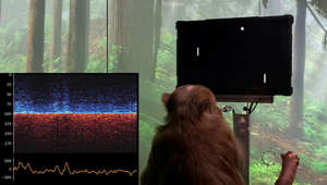 a cat sitting in front of a television screen: Elon Musk's Neuralink just implanted a chip in a monkey's brain and demonstrated it playing video games with its mind. The science behind that could be a game-changer.