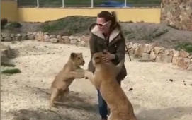 Lion cubs can't stop hugging their carer