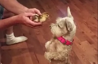 This puppy meeting a baby duck for the first time is amazing