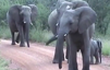 This might be the cutest elephant attack ever