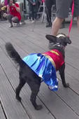 Dogs dress up for film festival show