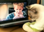 Cat kneads dough with the help of Gordon Ramsay
