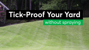 Tick-Proof Your Yard Without Chemicals