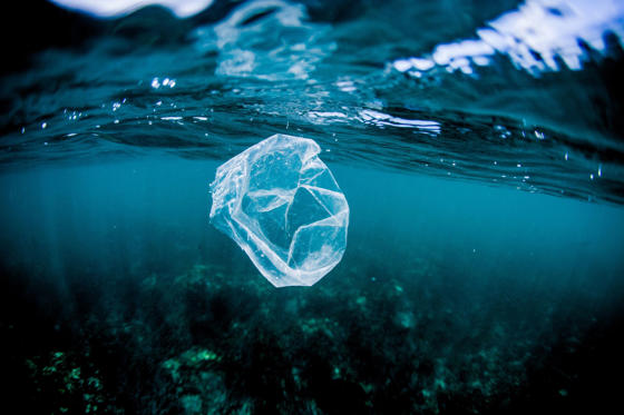 Slide 1 of 17: Plastic bag floating over reef in the ocean, Costa Rica