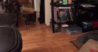 Cat tries to scare one of the nine lives out of her sister