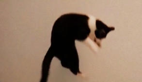 Watch this cat's impressive vertical leap