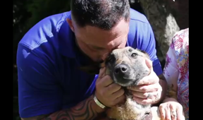 Staff sergeant cries when reunited with military dog