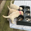 These cute pups can't contain their love for food