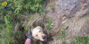 Watch the moment a stranded dog is rescued after falling down a 15ft cliff