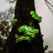 Ghost fungus glows bright