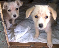 Puppies get new lease of life