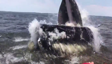 Humpback whale breaches extremely close to boat