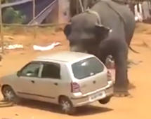Angry elephant flips car in rage
