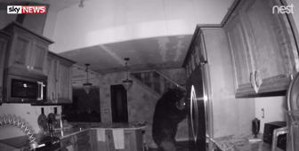 Bear spends hours eating food in house