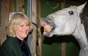 The Duchess of Cornwall tours the stables backstage at the Olympia Horse Show in London, U.K., on Dec. 17, 2008.
