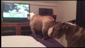 Bulldogs cheer on their favorite contender in 'Squirrel Olympics'