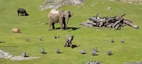 Cute elephant has fun chasing birds