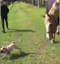 Just a dog taking a horse for a walk
