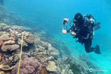 Researcher Grace Frank completes bleaching surveys along a transect line on an area known as One Tree Reef, in the Capricorn Group of Islands, on the Great Barrier Reef in Australia.