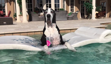 Dog chilling out in the pool