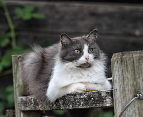 Slide 1 of 8: Beautiful cat I met at a local farm. From Duncan B.C.