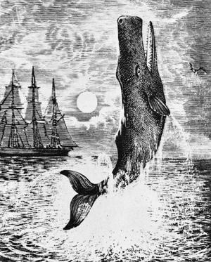 Slide 1 of 9: Moby Dick from Herman Melville 's 'Moby-Dick'. Novel about search for a whale. American author and poet, 1 August 1819 –  28 September 1891.  (Photo by Culture Club/Getty Images)