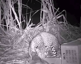 Night video shows mama leopard reuniting with her 3 cubs