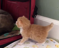 Kitten's cute first steps