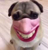 This dog will make you burst into laughter!