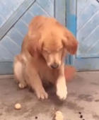 Dog appears to do simple mathematics
