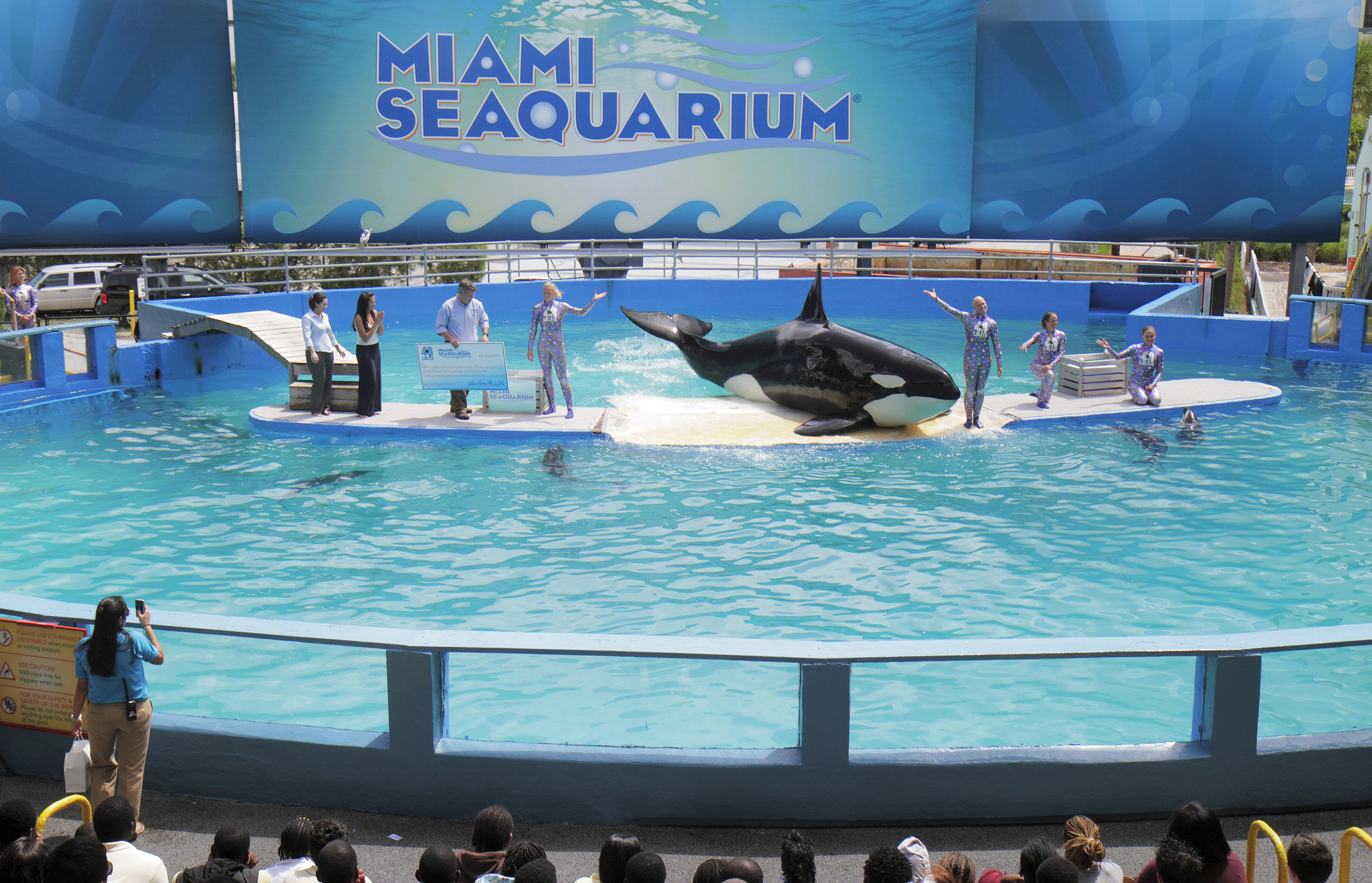 Lolita the killer whale may never go free. And that could be what's best for her, scientists say