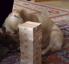 Dog is a talented Jenga player