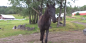Horse comes running to whistled theme from 'Legend of Zelda'