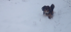 Owner tricks dog by playing fetch with snowballs