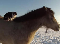 Relaxed cat takes a ride on the back of a horse