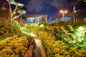 Changi Airport has its own sunflower garden (Shutterstock)