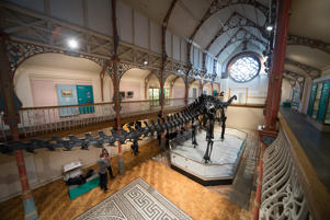 Dippy the dinosaur, a diplodocus skeleton on loan from the Natural History Museum is unveiled at Dorset County Museum on the first stage of an eight-stop tour of the UK on February 9, 2018 in Dorchester, Dorset.