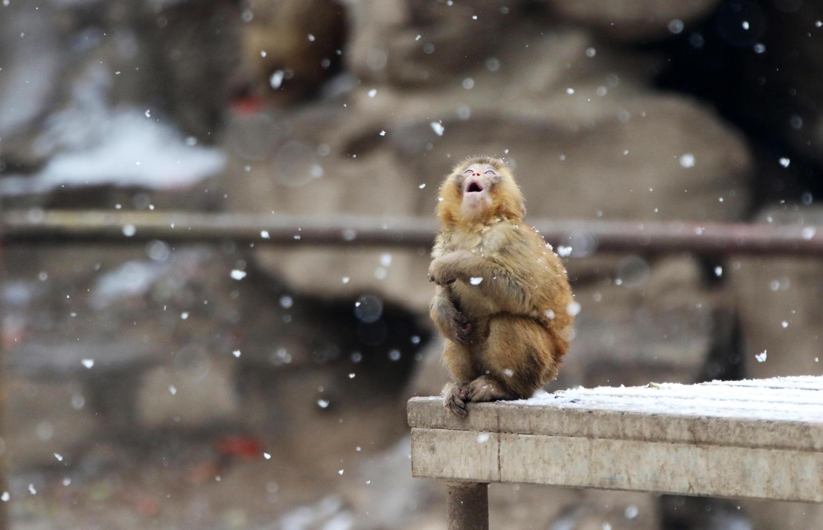 今日图片 - yutin08 - yutin08 雨天 的博客