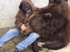 Caretaker soothes sick 10-foot bear in Otisville, New York