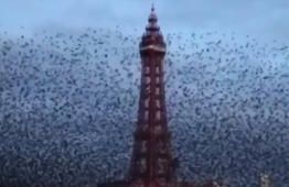Starling spectacle over Blackpool