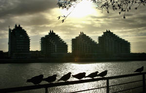 File:  Birds sit on a rail overlooking a new development next to Wandsworth Bridge
