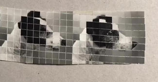 This amazing dog collage has gone viral!
