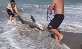 Do-gooders come to the rescue of a stranded shark