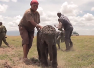 Newborn baby elephant rescued from muddy pond