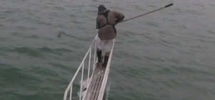 White shark jumps out of water to attack man