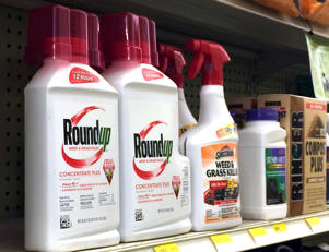 FILE- This Jan. 26, 2017, file photo shows containers of Roundup weed and grass killer, a Monsanto brand, on a shelf with other products for sale at a hardware store in Los Angeles. Monsanto reports earnings Thursday, April 5, 2018. (AP Photo/Reed Saxon, File)