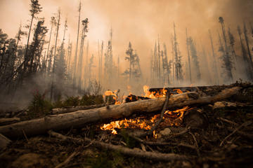 A wildfire burns on a logging road approximately 20 km southwest of Fort St. James, B.C., on Wednesday, August 15, 2018.