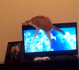 Clumsy cat falls and knocks down TV